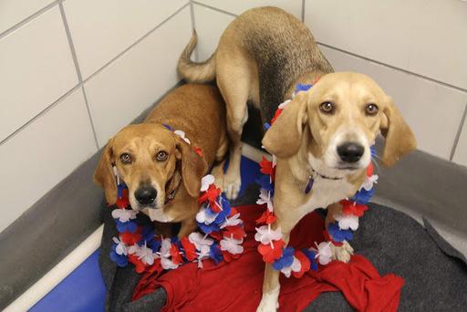 Photo Credit: SPCA of Texas Staff