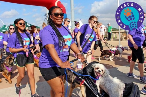 Strut Your Mutt 2018