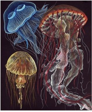 Jellyfish, Crissy Williamson.jpg