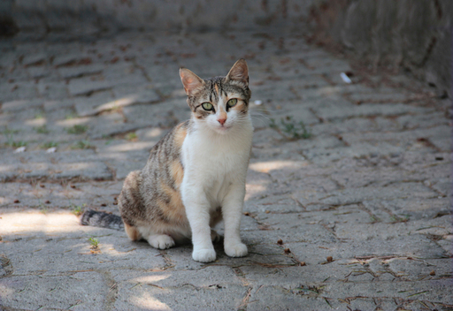 National Community Cat Month