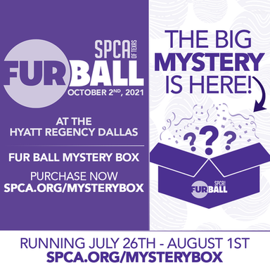 Fur Ball Mystery Box